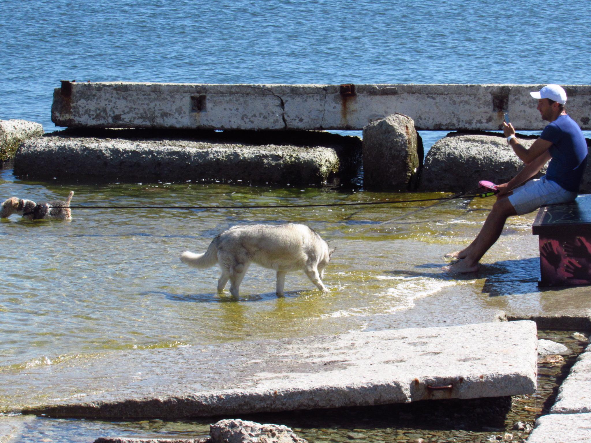 Dog along the Baltic Coast, Tallinn